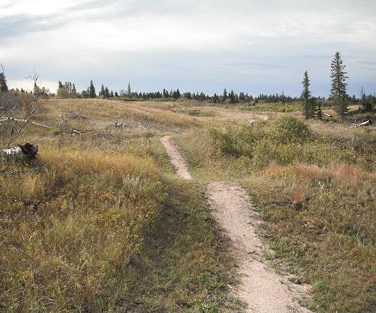 Glenboro South Cypress Trail